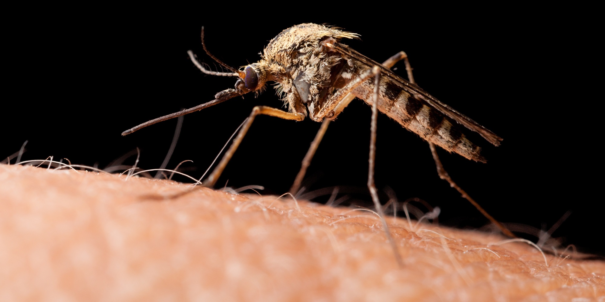 How About Dengue Fever Symptoms, Treatment and Prevention